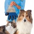 Kedi Köpek Tüy Alma Eldiveni